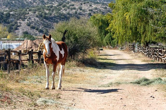 horse-419741_640